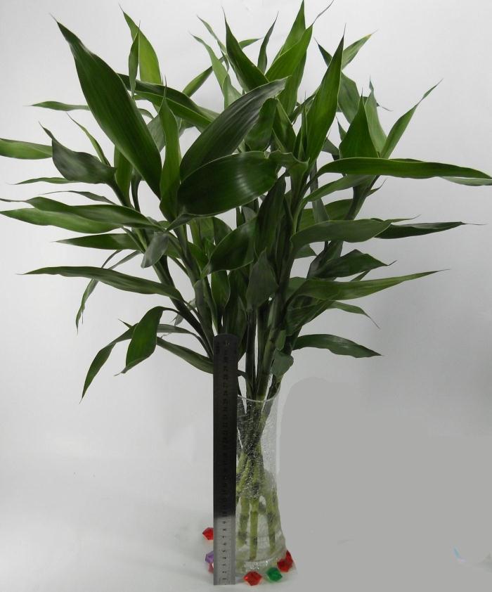 室外植物速写步骤